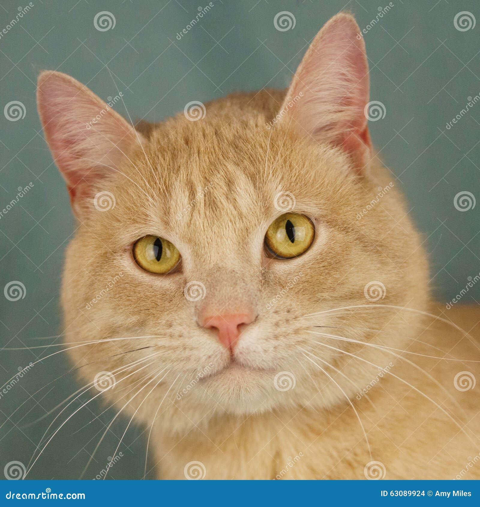 Download Verticale de chat photo stock. Image du avec, visage - 63089924