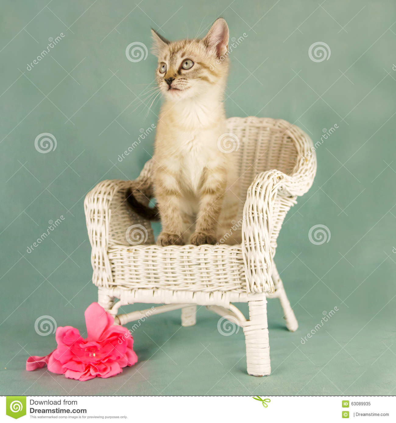 Download Verticale de chat image stock. Image du chat, petit, mignon - 63089935