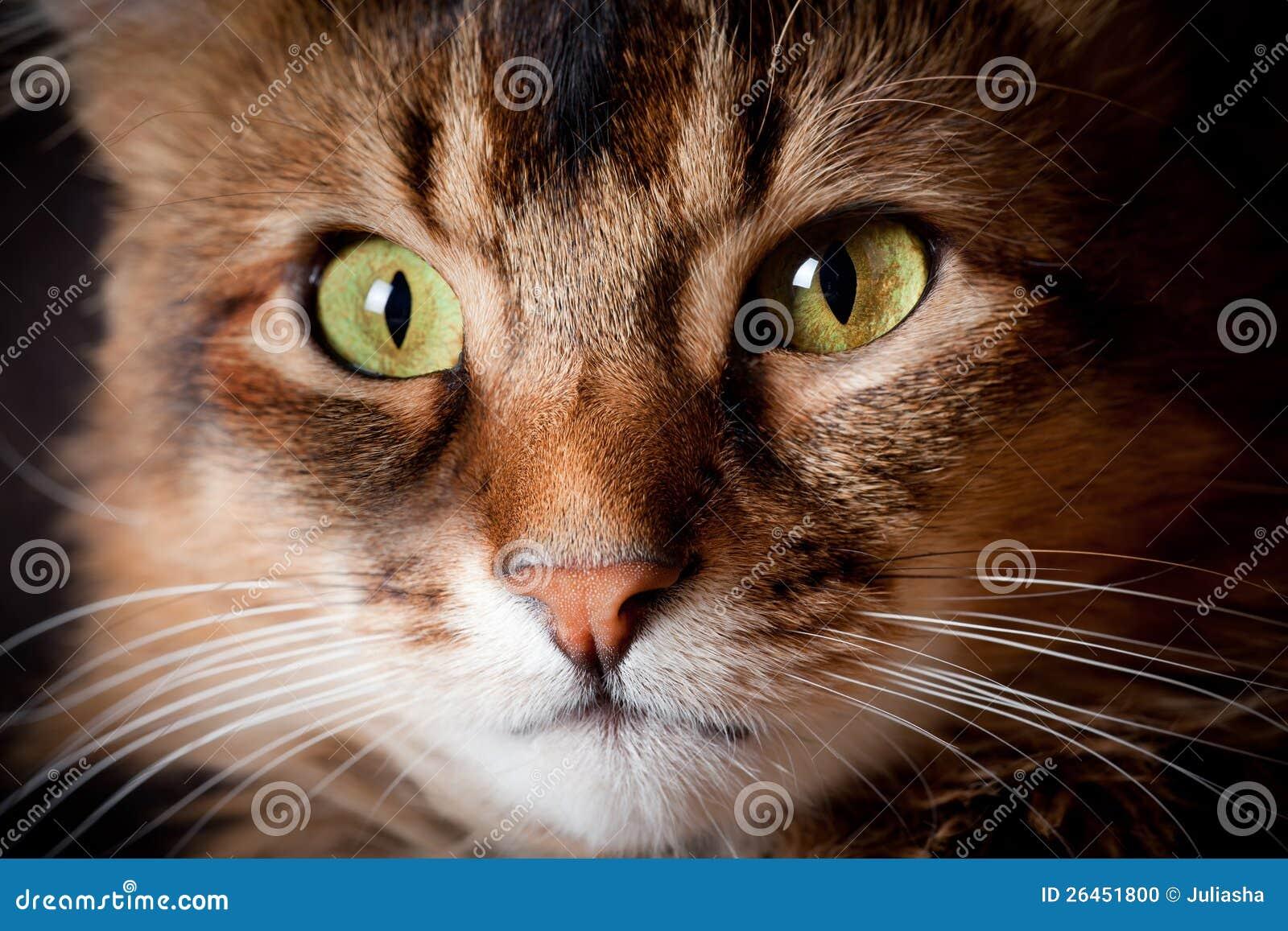Verticale somalie de chat