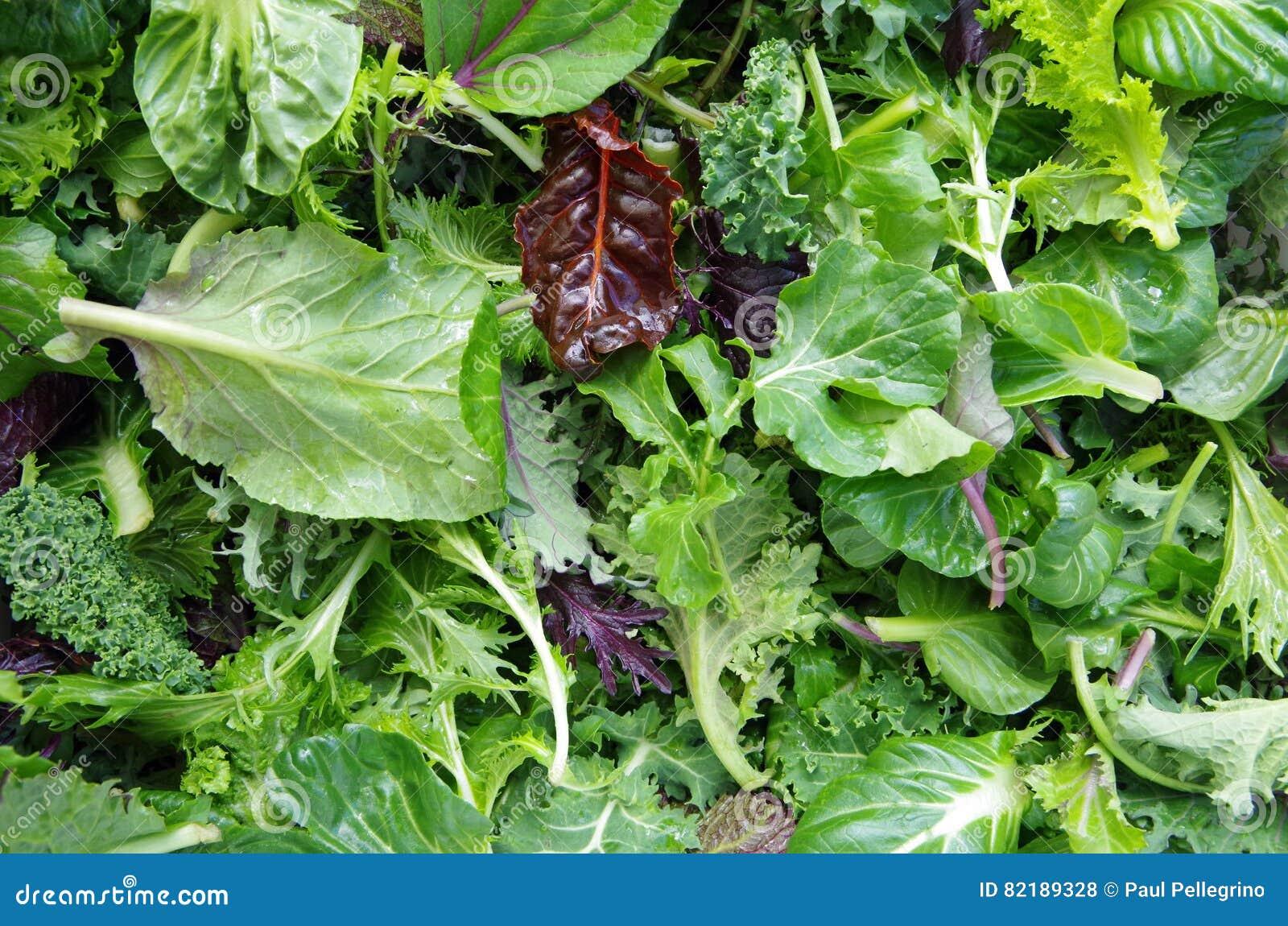 Verts de gisement de salade mixte