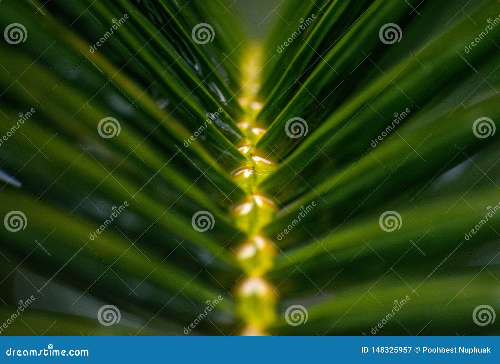 Verwischen Sie die Blätter von Palmen