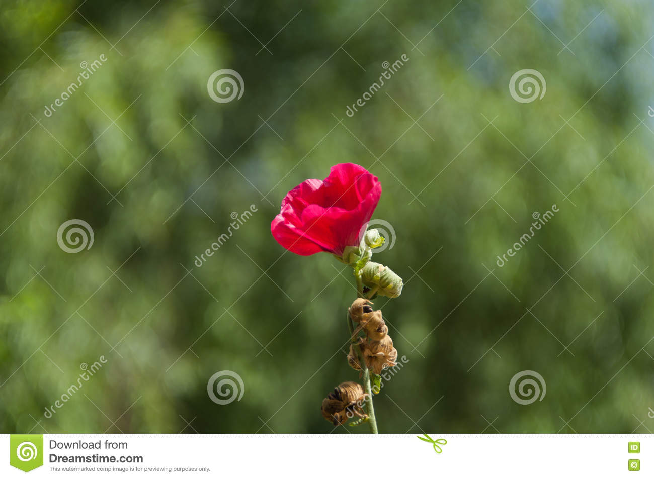 Very beautiful flower stock image image of flower much 76636361 very beautiful flower izmirmasajfo Choice Image
