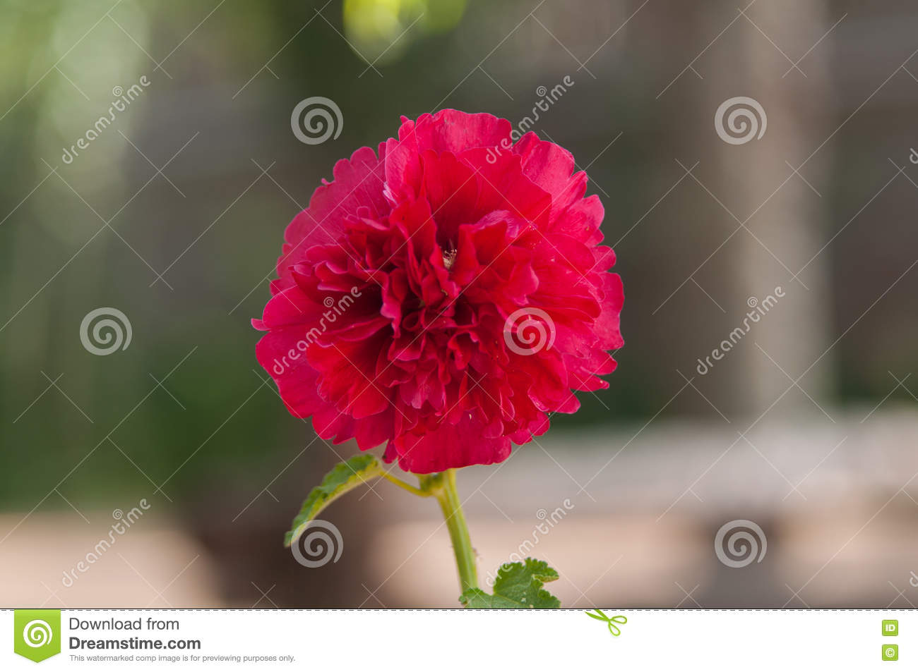 Very beautiful flower stock image image of beautiful 76636363 there are many beautiful flowers in the park is such a beautiful flower that i like it very much izmirmasajfo