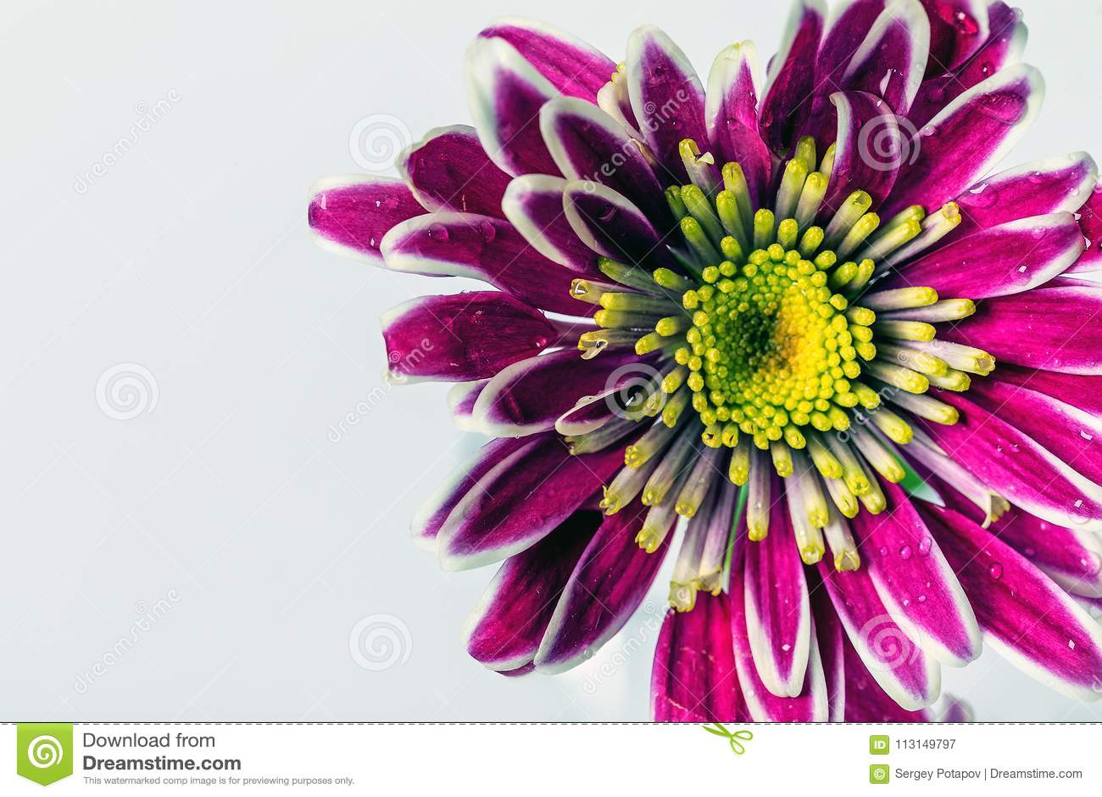 Beautiful flower on white background stock image image of flowers download beautiful flower on white background stock image image of flowers yellow izmirmasajfo