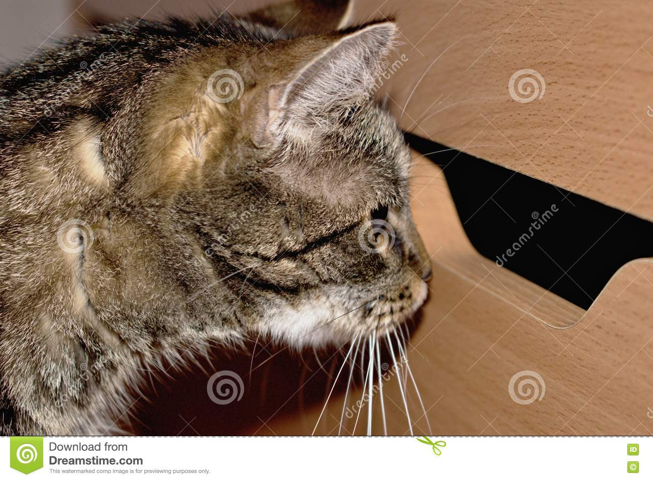 Download Very curious cat stock image. Image of rest, carpet, orange - 79637651