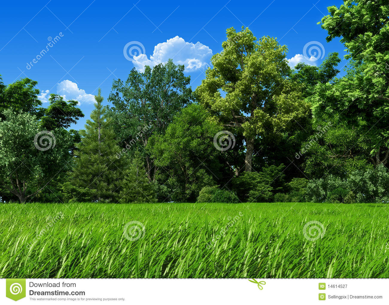 Very Detailed 7000px Forest Glade Template Royalty Free ...
