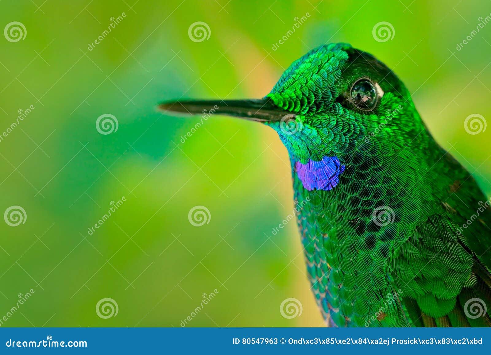 Very Detailed Portrait Of HummingbirdGreen-crowned ...