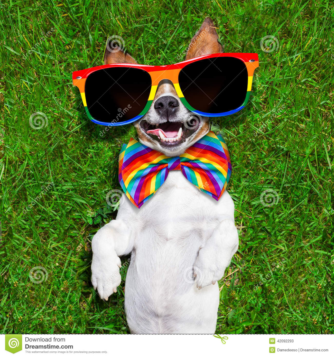 Very funny gay dog stock image. Image of loud, freedom ... - photo#29