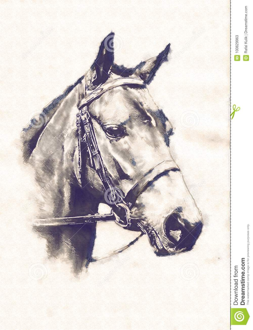 A very nice freehand horse head pencil drawing
