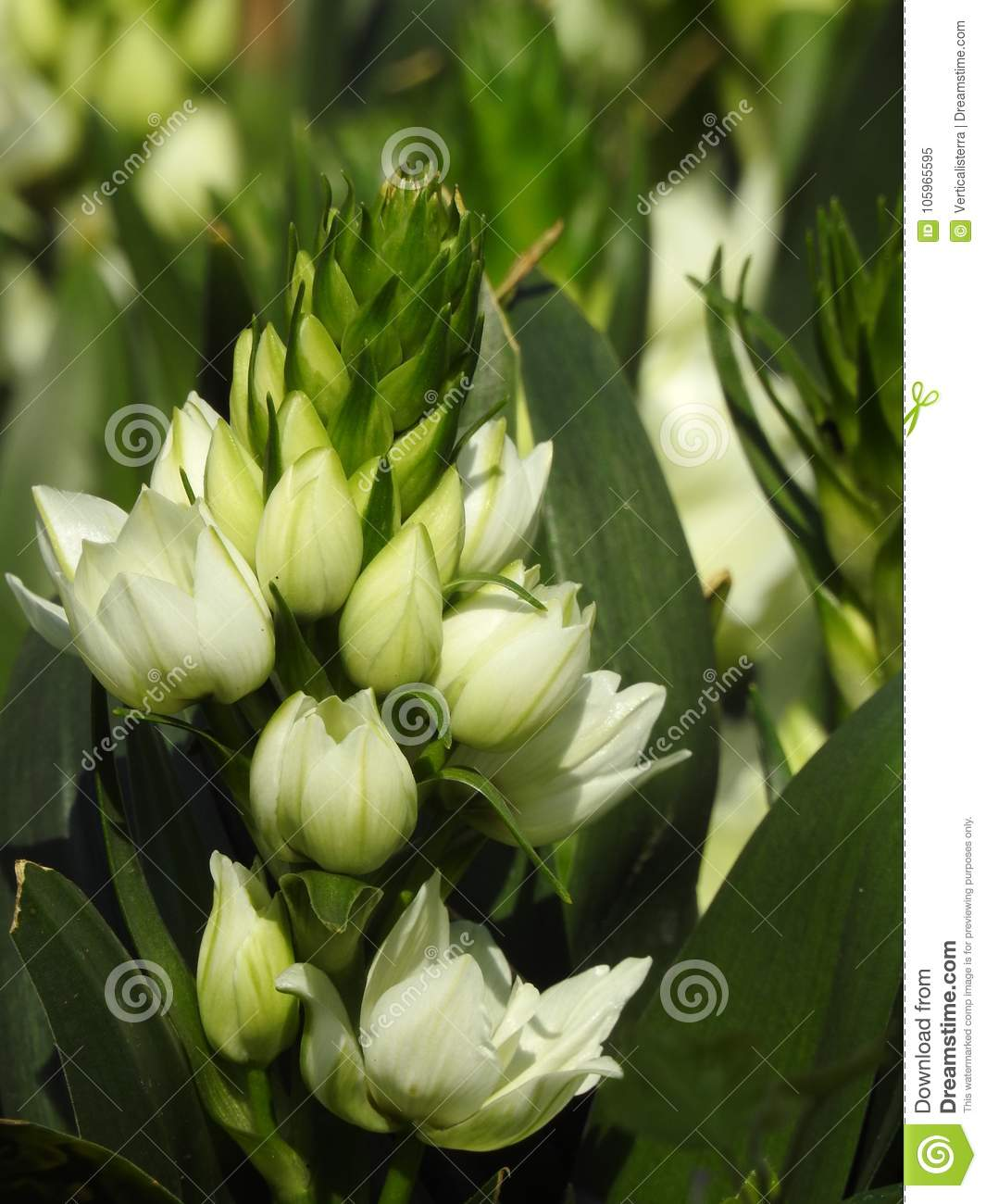 Very Nice White Flowers With A Nice Background Stock Illustration ...
