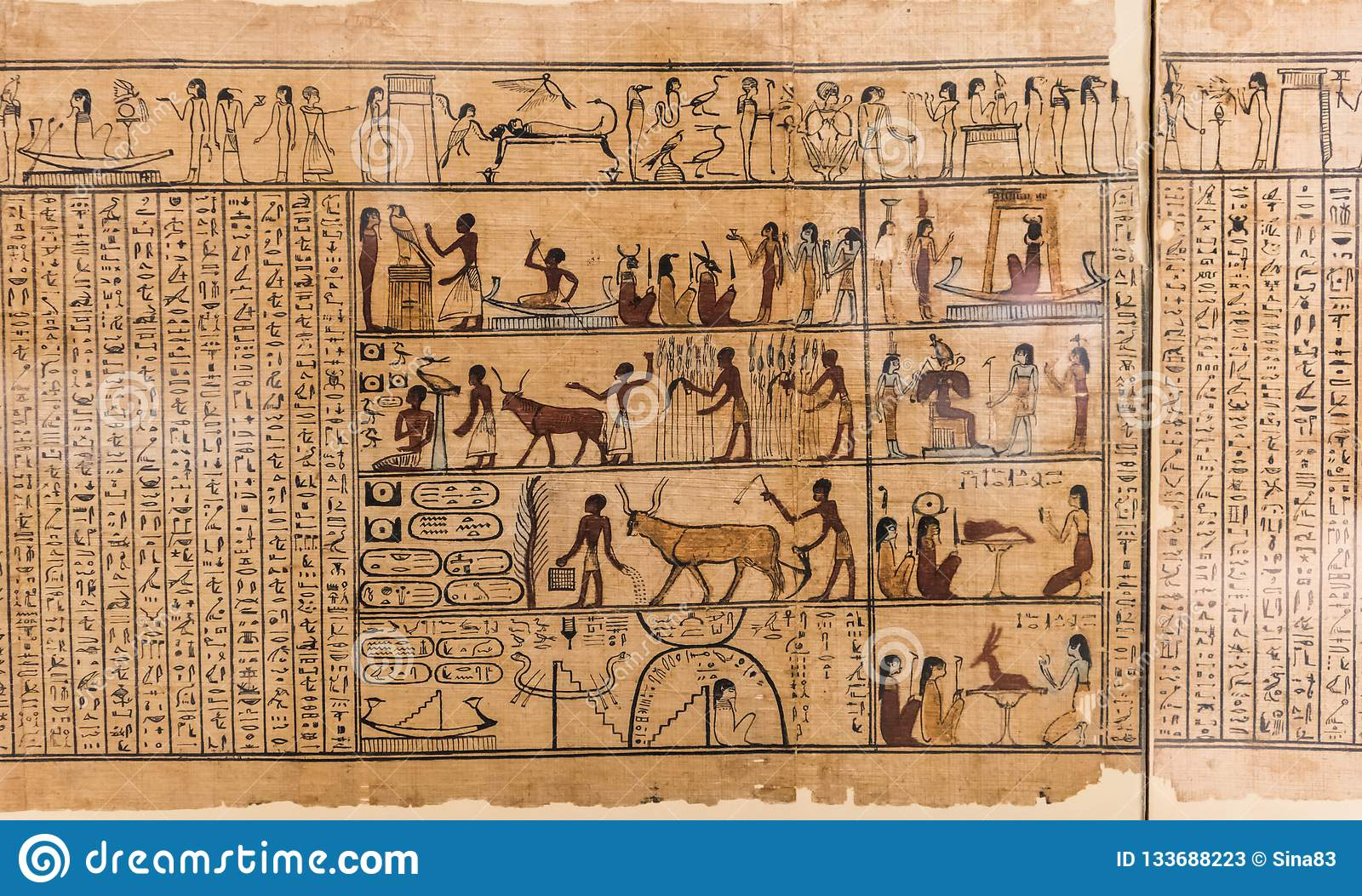 Egyptian hieroglyph`s character`s on papyrus