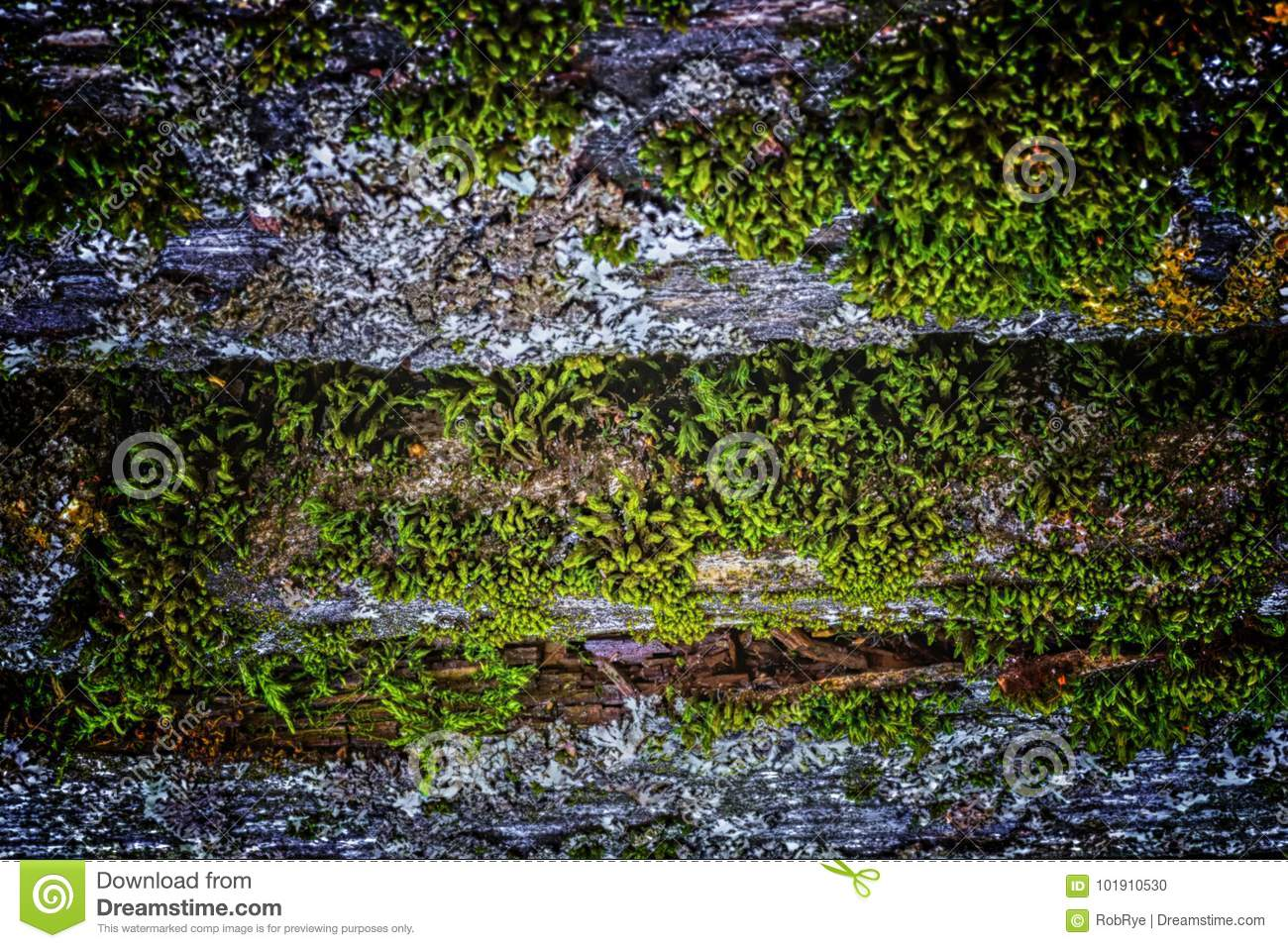 Very old weathered rustic wood texture with moss and cracks on t