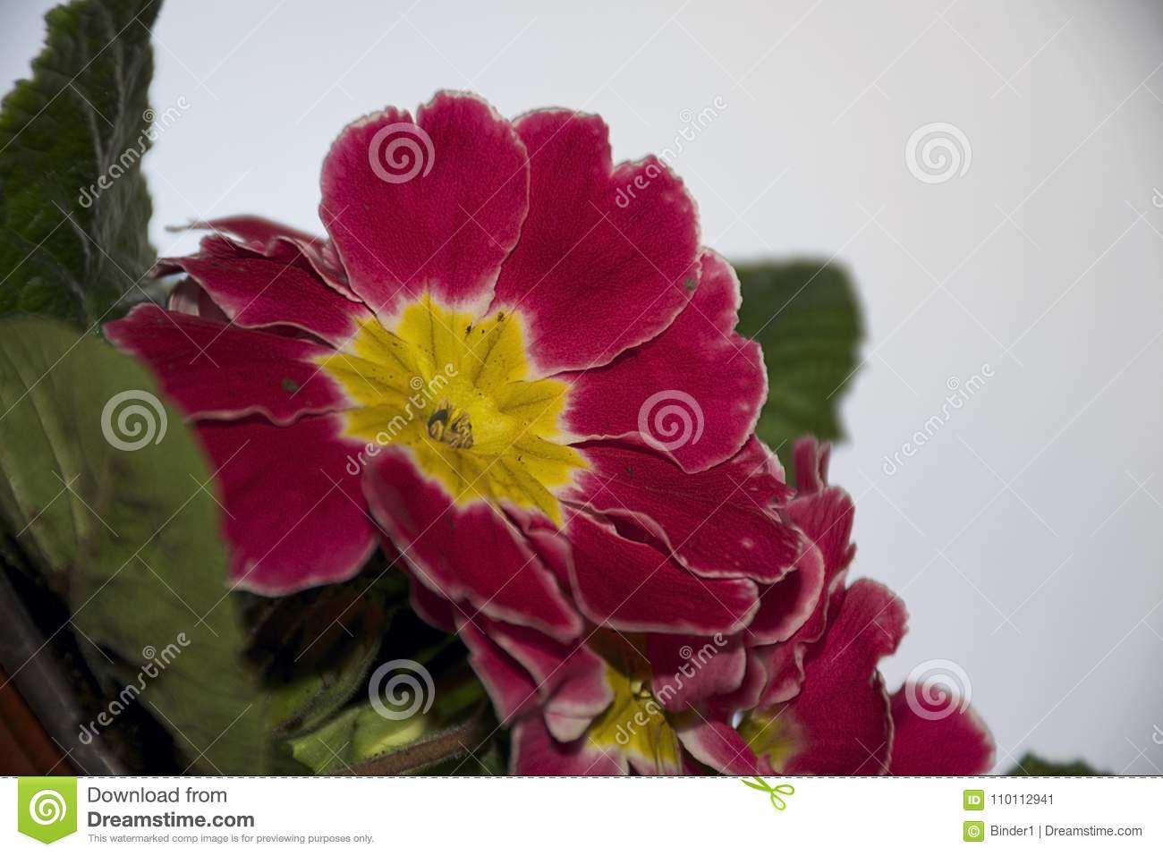 Very Pretty Colorful Flowers Close Up Stock Image Image Of Serbia