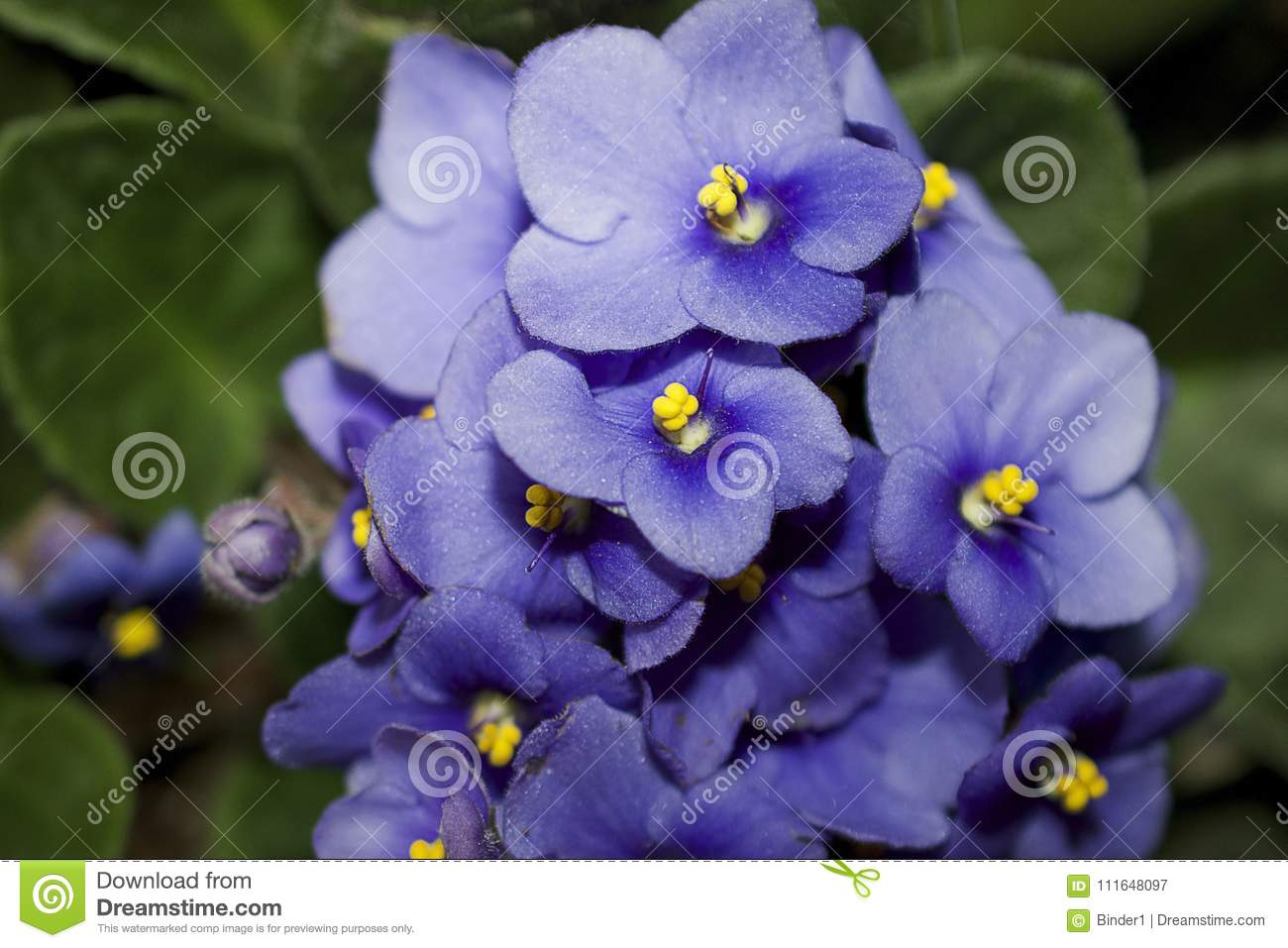 Very pretty colorful spring flowers close up stock image image of download very pretty colorful spring flowers close up stock image image of nice beautiful mightylinksfo