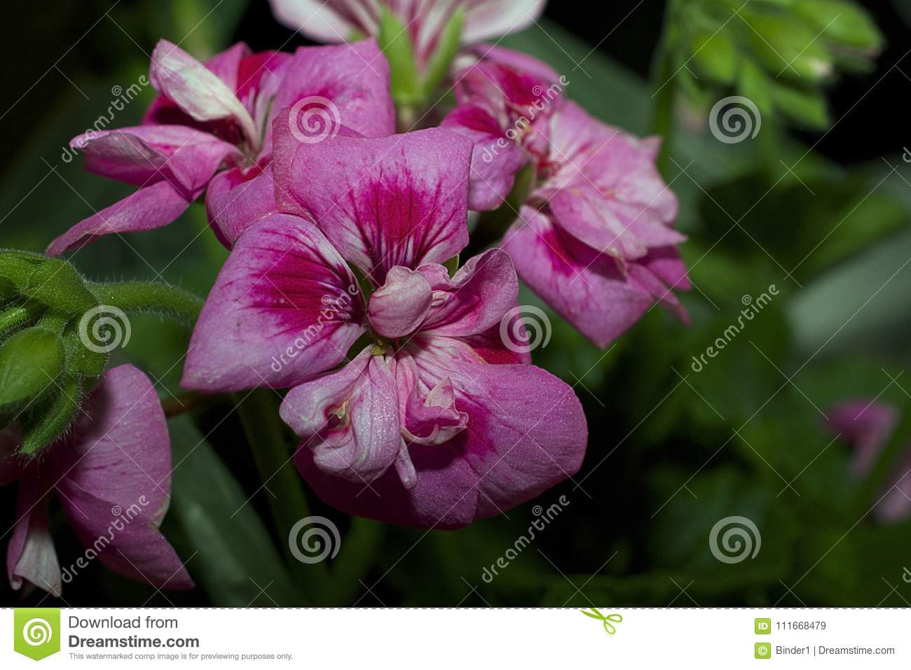 Very Pretty Colorful Spring Flowers Close Up Stock Image Image Of