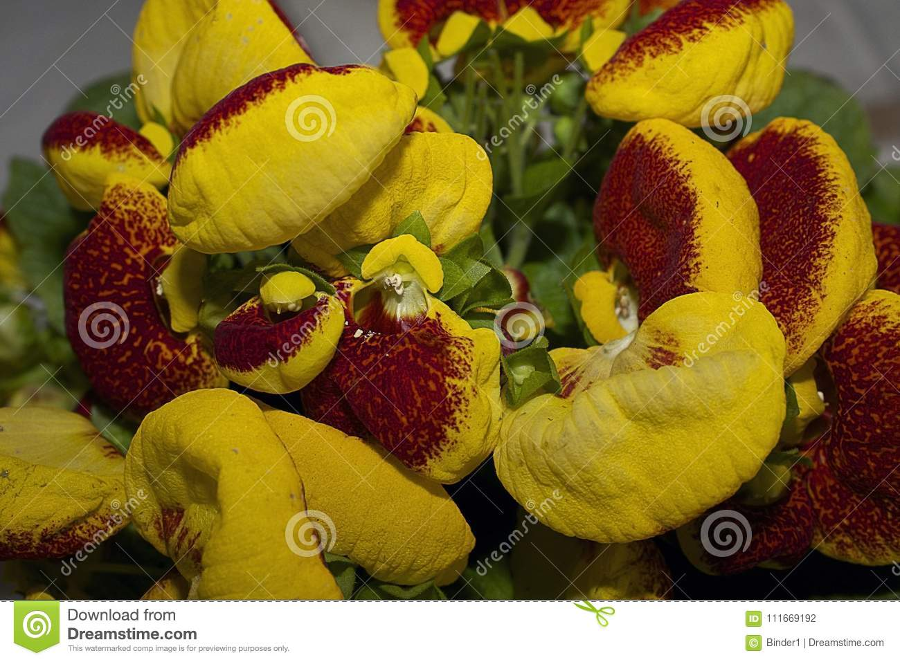 Very pretty colorful spring flowers close up stock photo image of download very pretty colorful spring flowers close up stock photo image of beautiful floral mightylinksfo