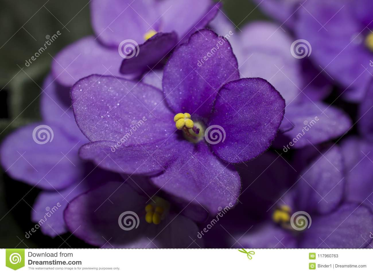 Very Pretty Colorful Spring Flowers In My Garden Stock Image Image
