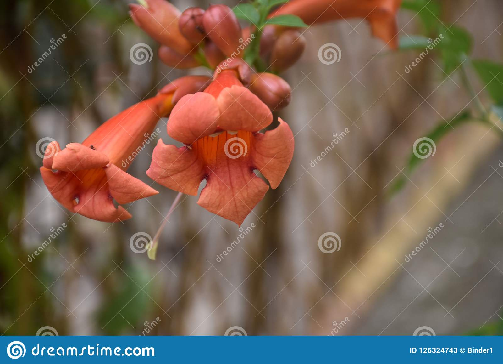 Beautiful Orange Summer Flowers My Garden Stock Image Image Of
