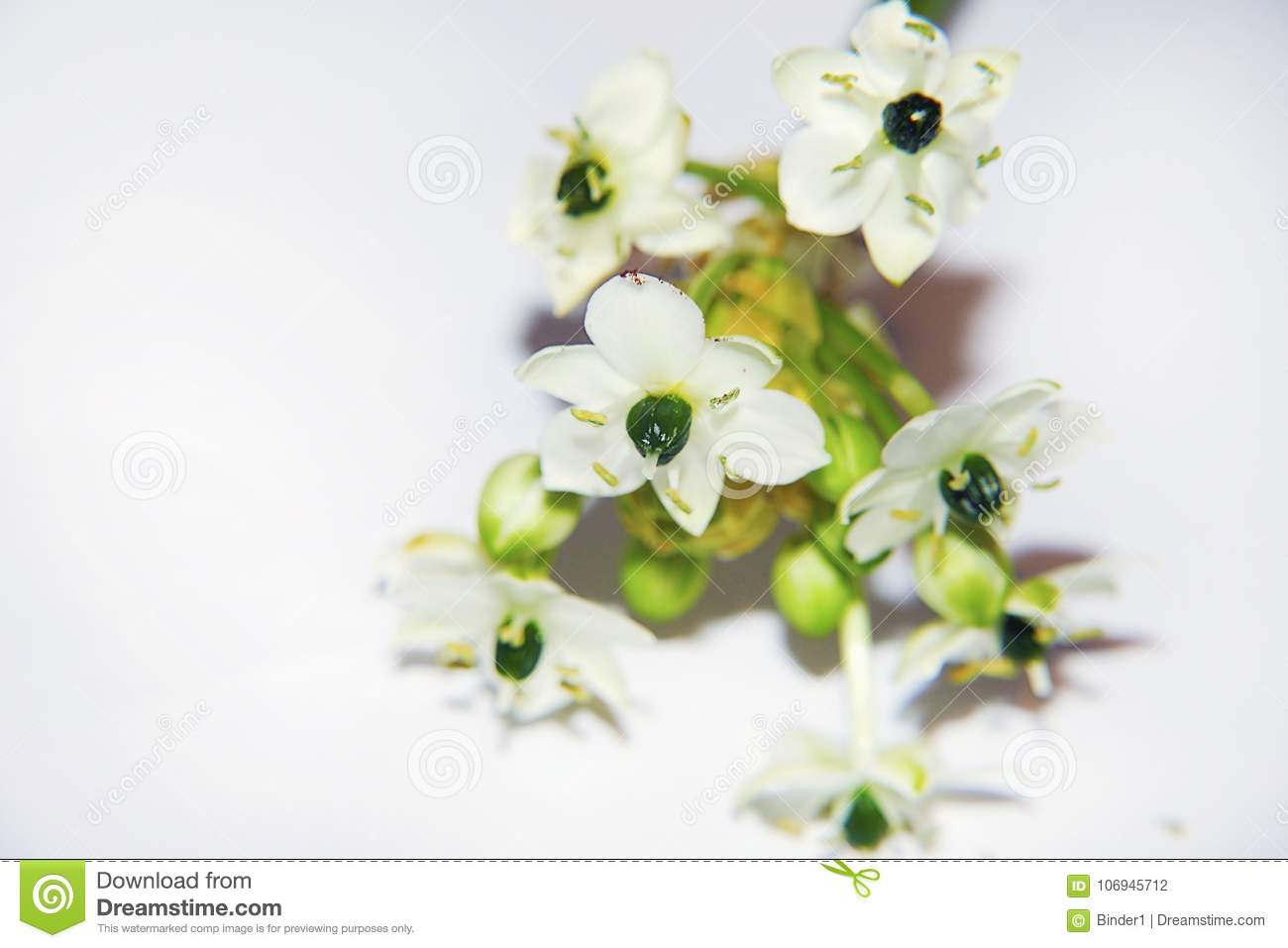 Very Pretty White Flower With The Yellow Flower Close Up Stock Photo