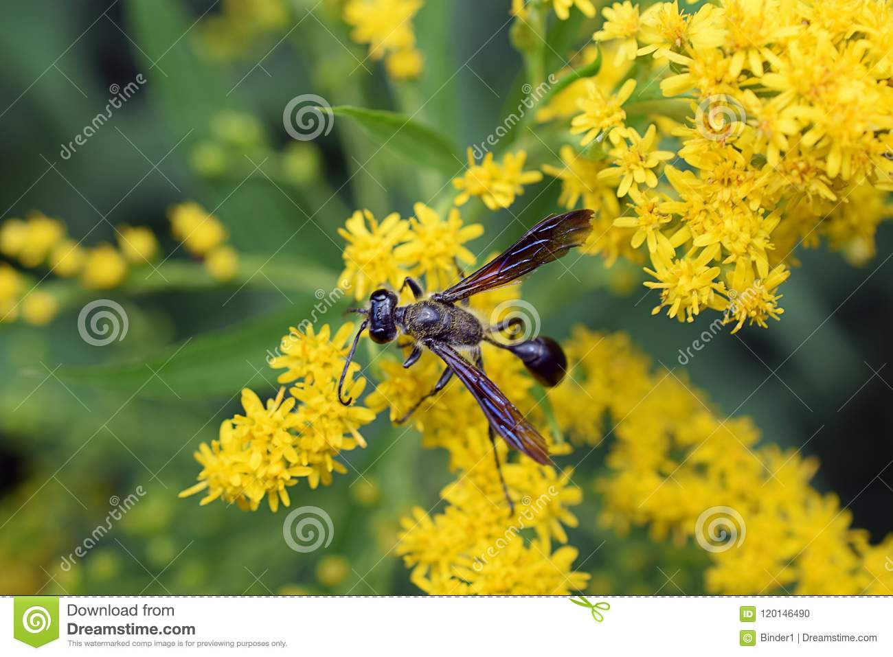Beautiful Yellow Summer Flower In My Garden Stock Photo Image Of