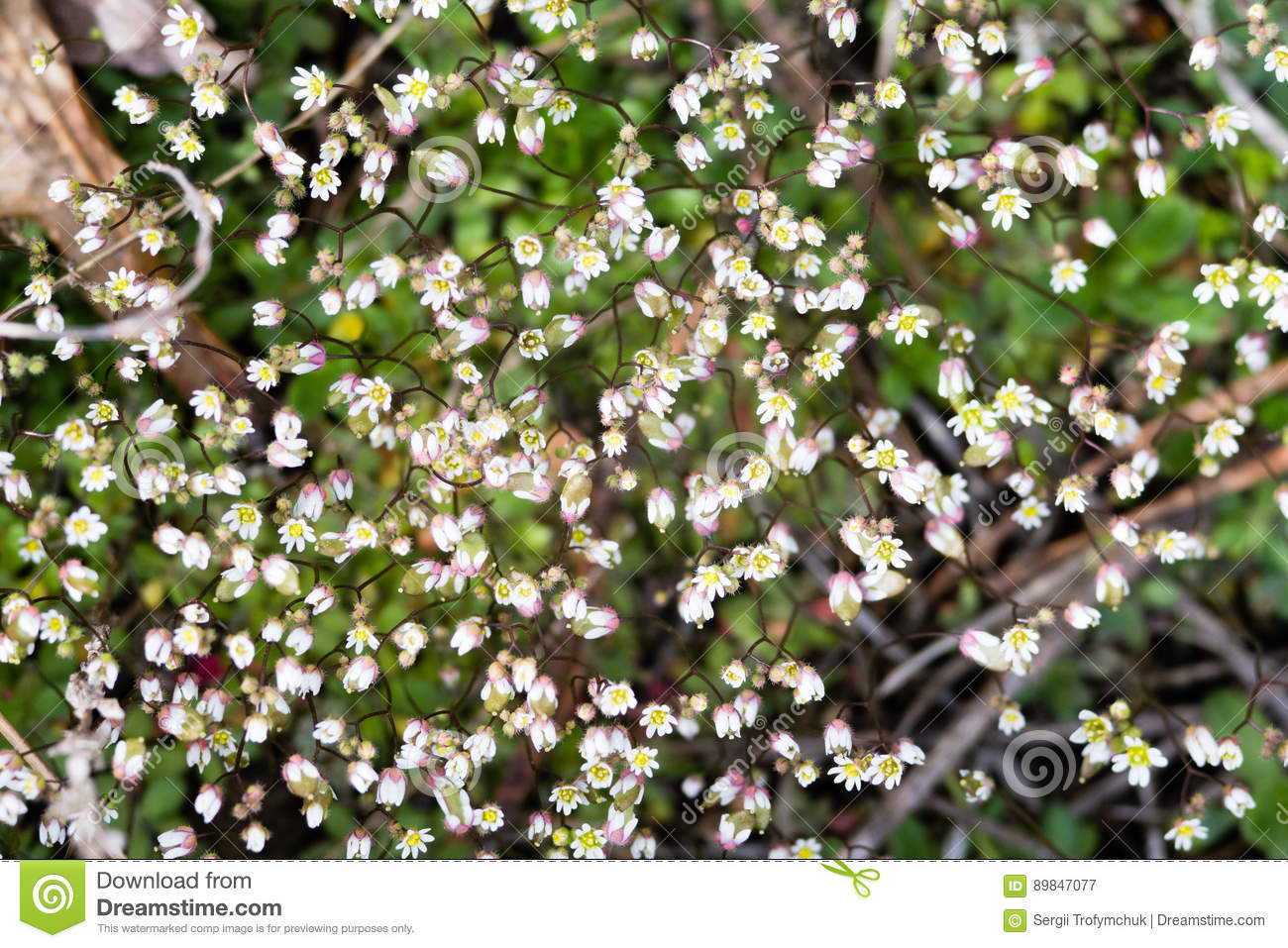 Very small white spring flowers floral background macro close up download comp mightylinksfo