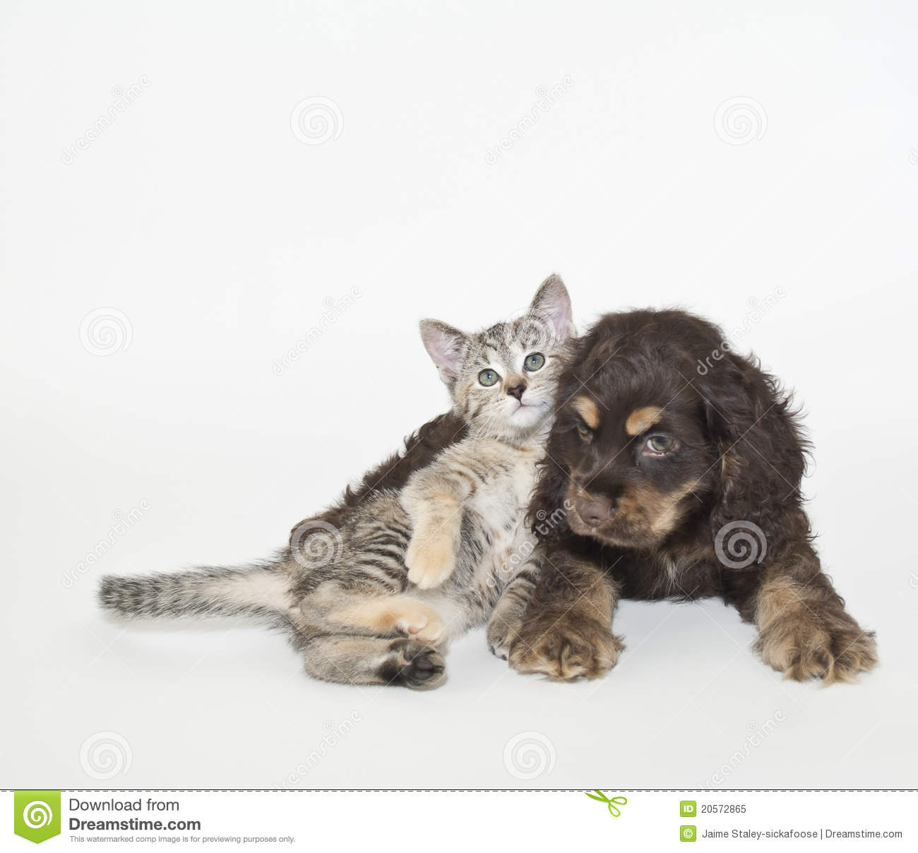 Displaying 16> Images For - Very Cute Puppies And Kittens Together...