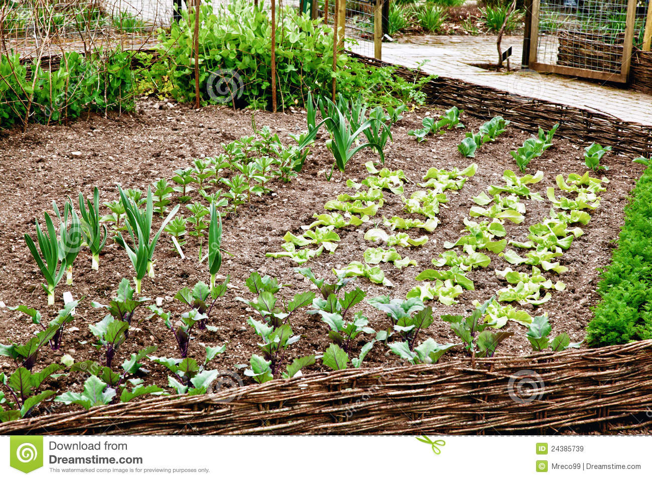 Very tidy vegetable patch royalty free stock images for Vegetable patch