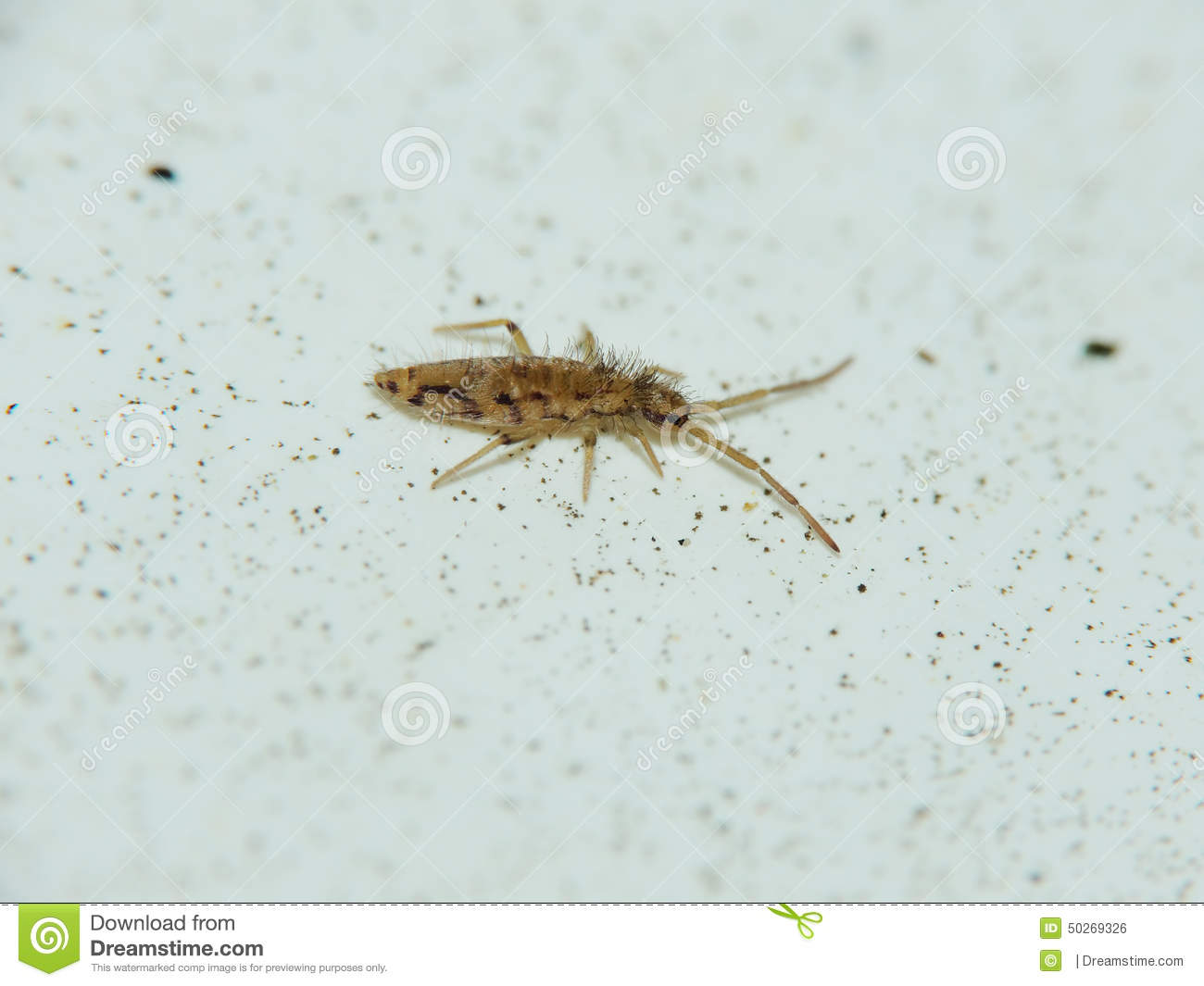 Download Very Tiny Insect Stock Photo Image Of Long Legged
