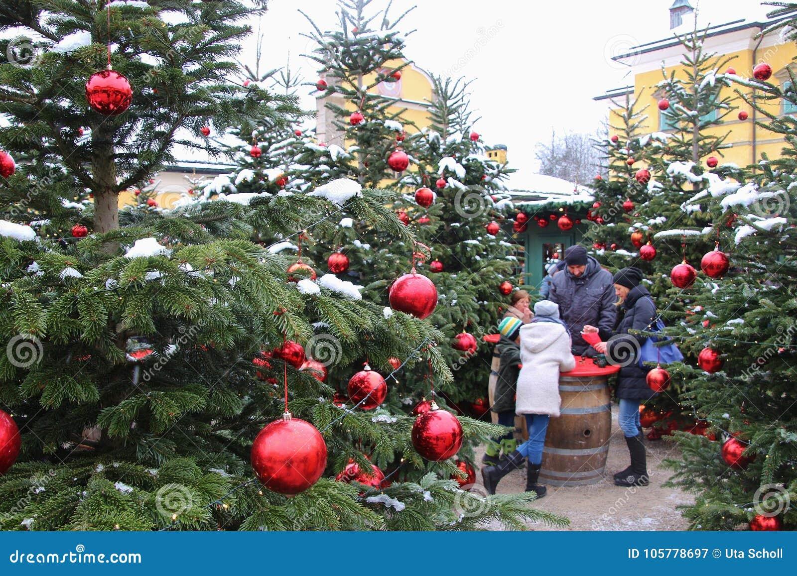 österreich Weihnachtsbaum.Verzierte Weihnachtsbäume Am Weihnachtsmarkt Von Hellbrunn Palast