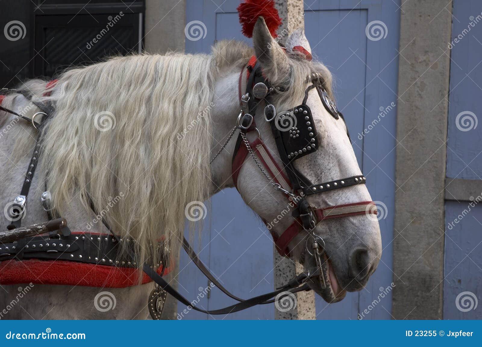 Verziertes Pferd