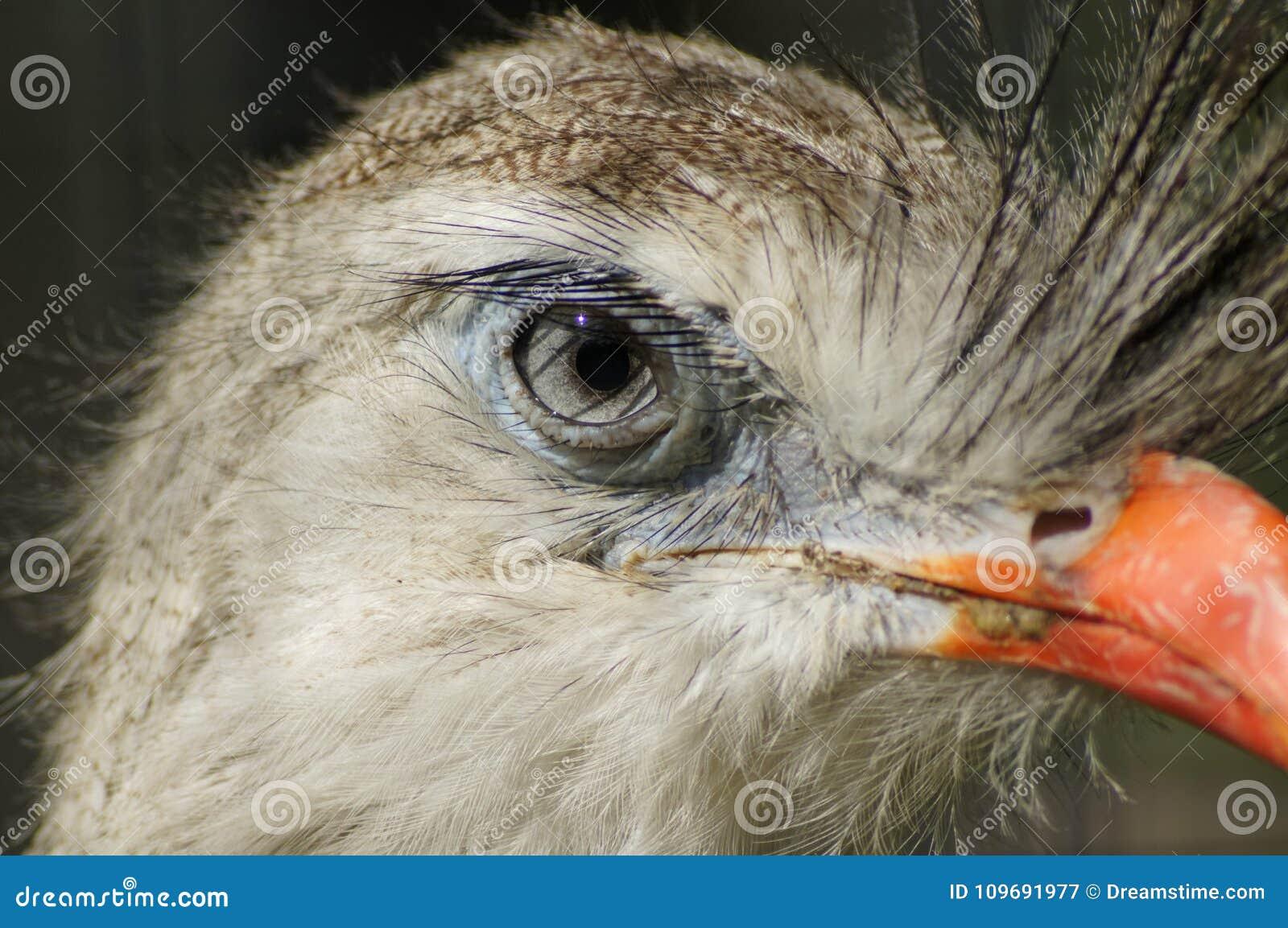 Verzoening op pauw` s oog