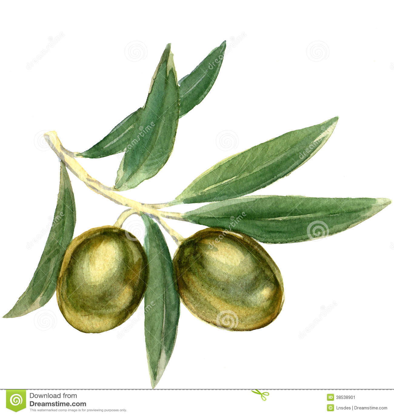 Verzweigen Sie sich mit grünen Oliven