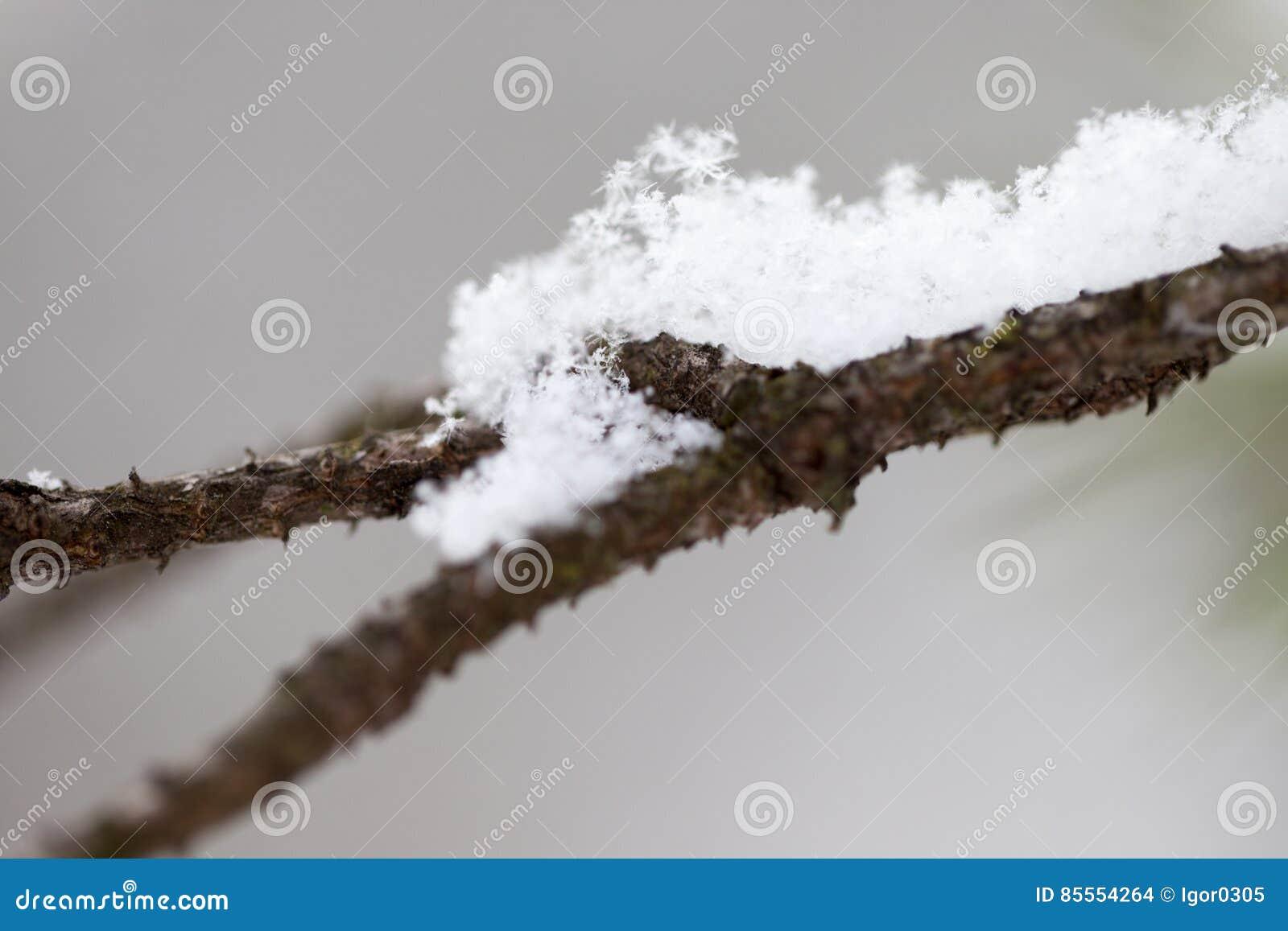 Verzweigen Sie sich mit Schnee