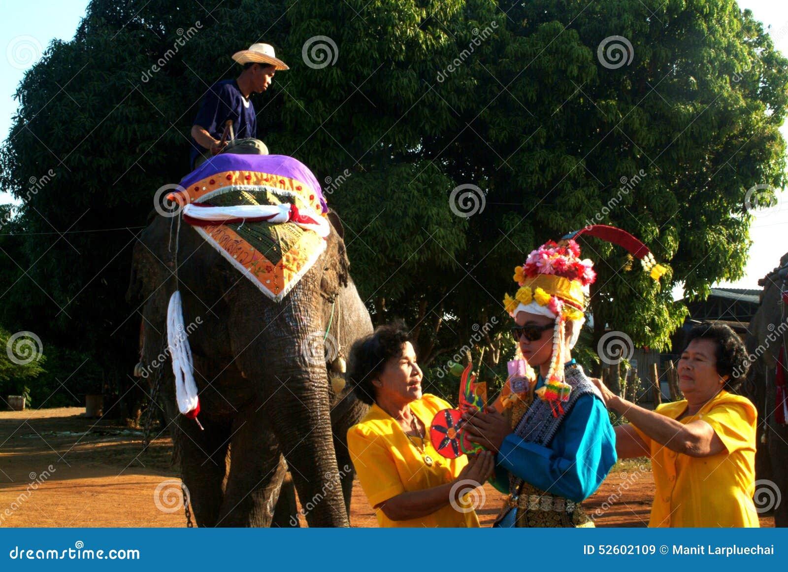 Vestido do principiante na classificação Proce da parte traseira do elefante de Satchanalai do si