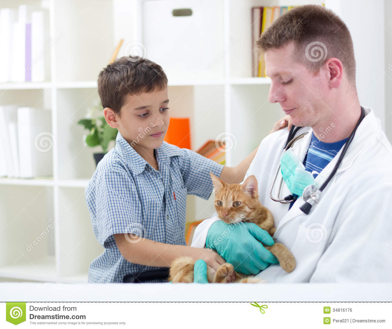 Vet Calms A Little Cat And Ready For Review Royalty Free Stock Image ...