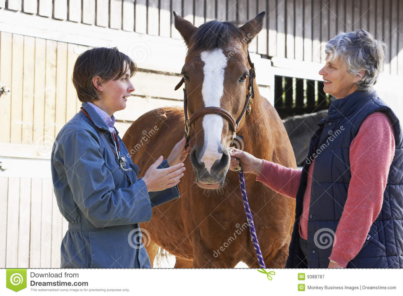 Vet In Discussion With Horse Owner Royalty Free Stock