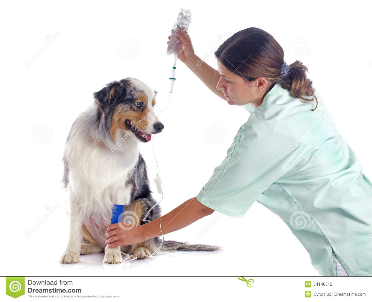 how to become a vet in australia