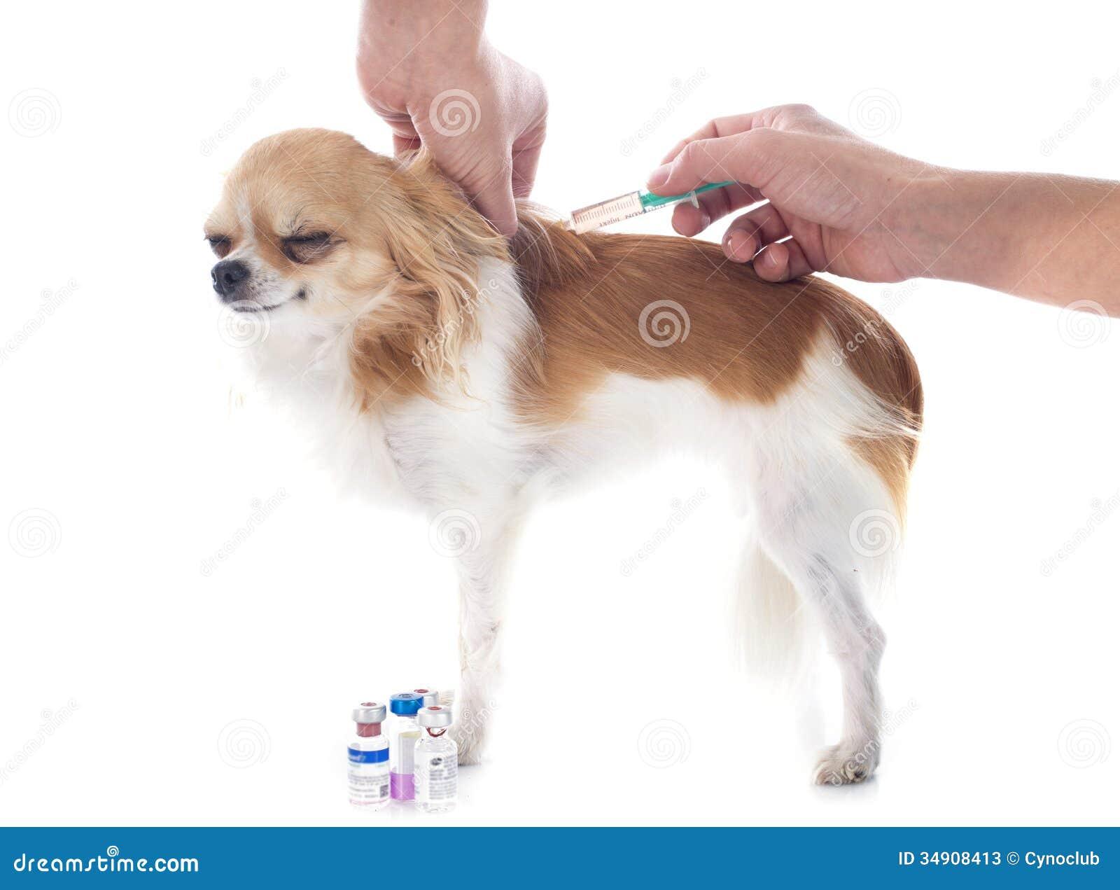 Vet And Dog Stock Photos Image 34908413