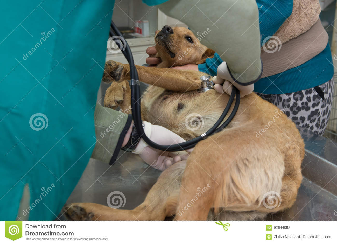 Vet examine the dog before adoption