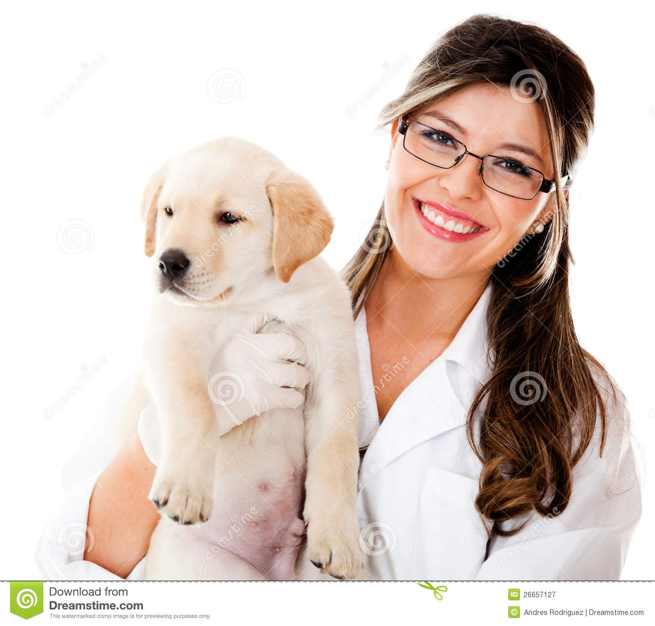 Vet Holding A Little Dog Royalty Free Stock Photography - Image ...
