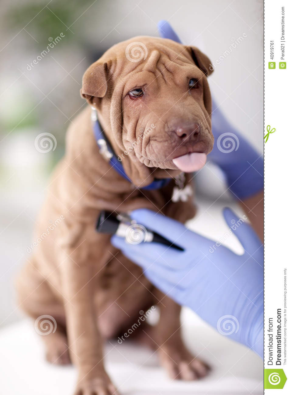 Video Of Insulin Shot To Dog