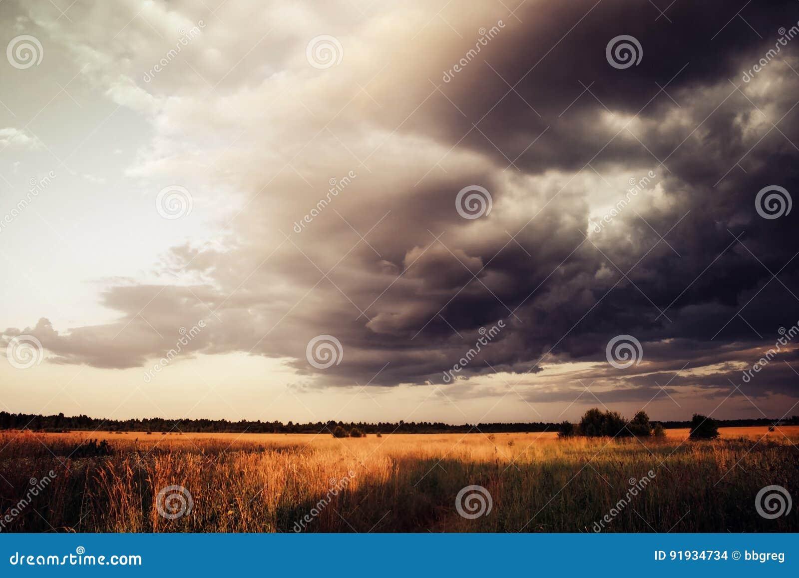 Vetefält under dramatisk himmel med mörkermoln, annalkande åskväder, sommarlandskap