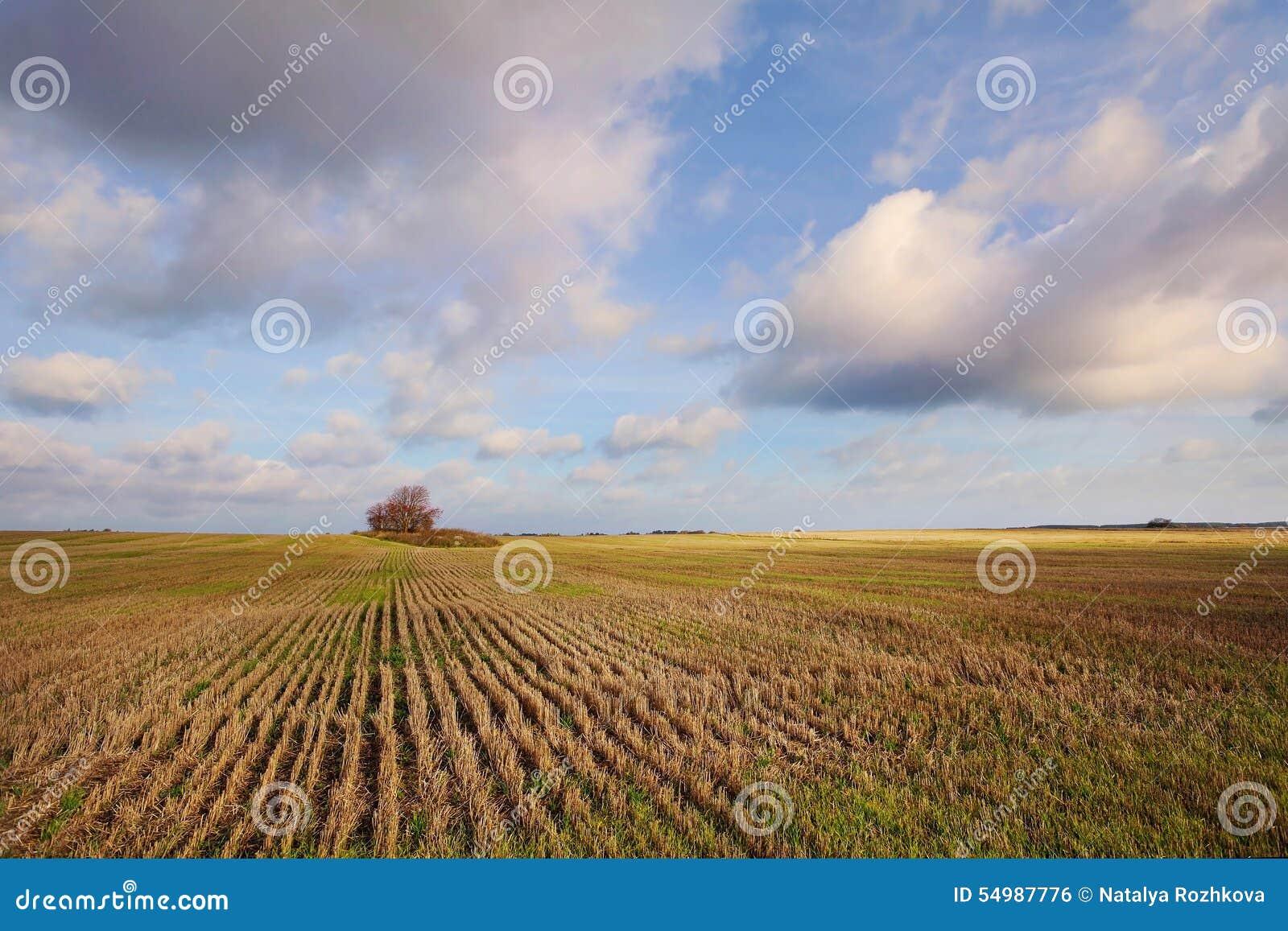 Vetefältet till horisonten