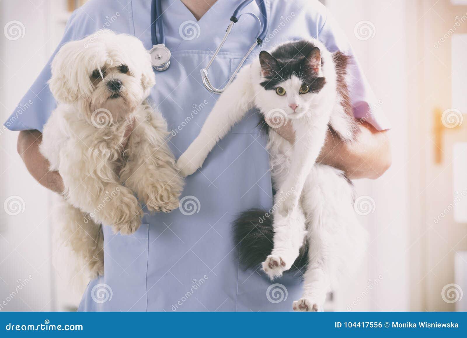 Veterinário com cão e gato