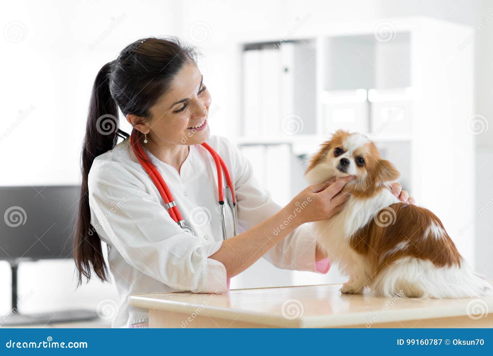 Veterinário de sorriso com cão, na tabela na clínica do veterinário