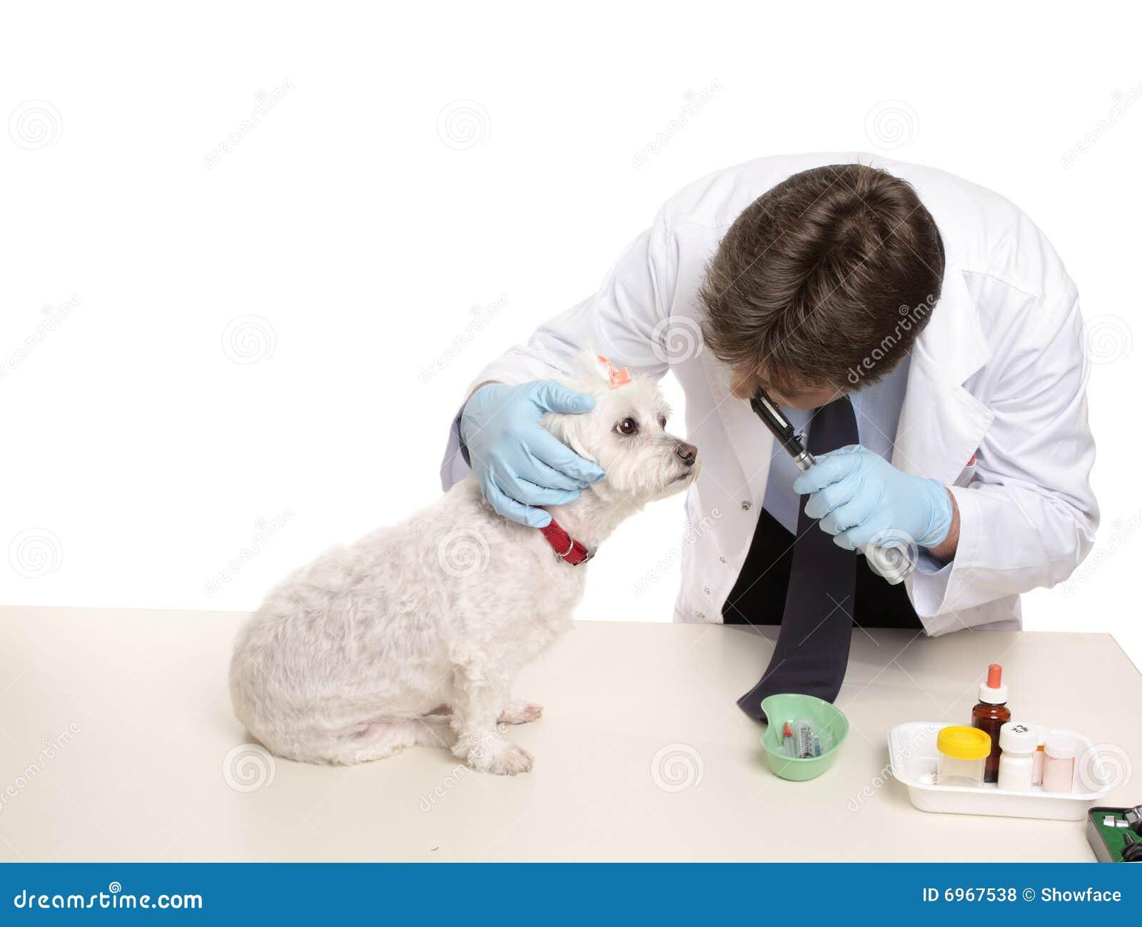 Veterinärüberprüfung