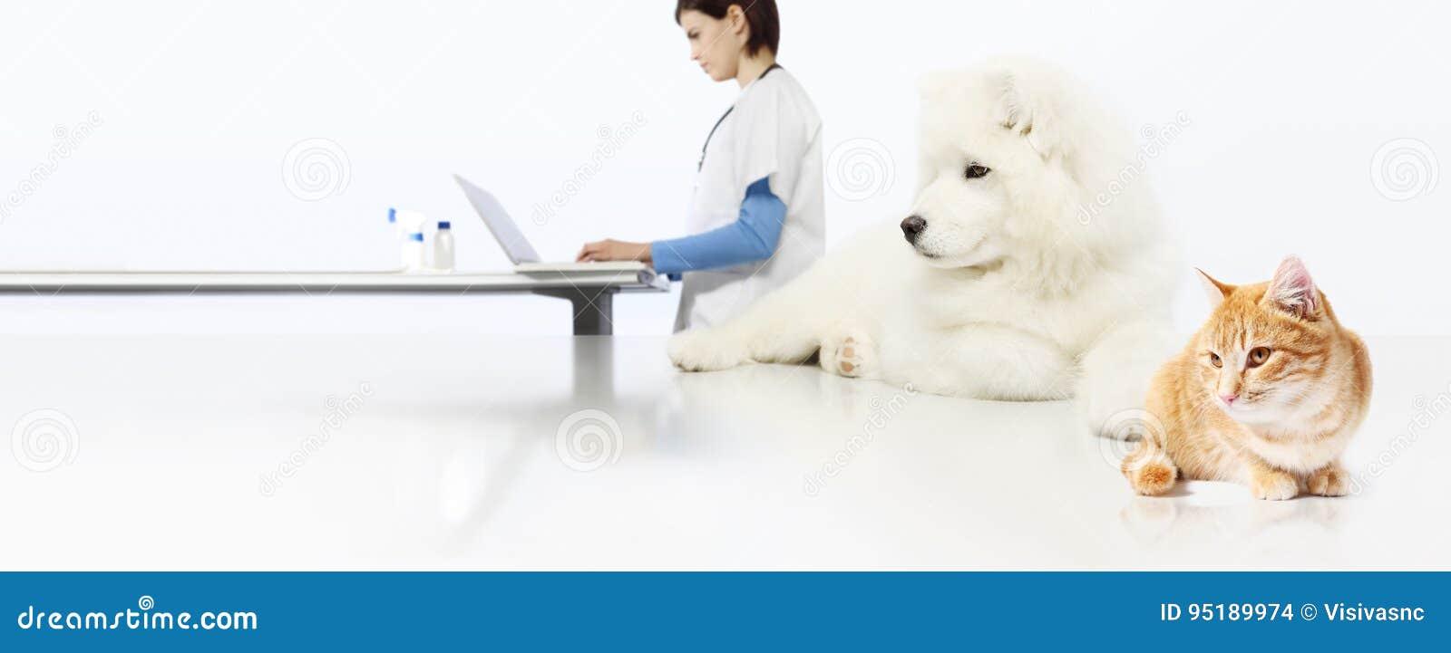 Veterinär- begrepp veterinär- doktor, hund och katt i veterinäroffi