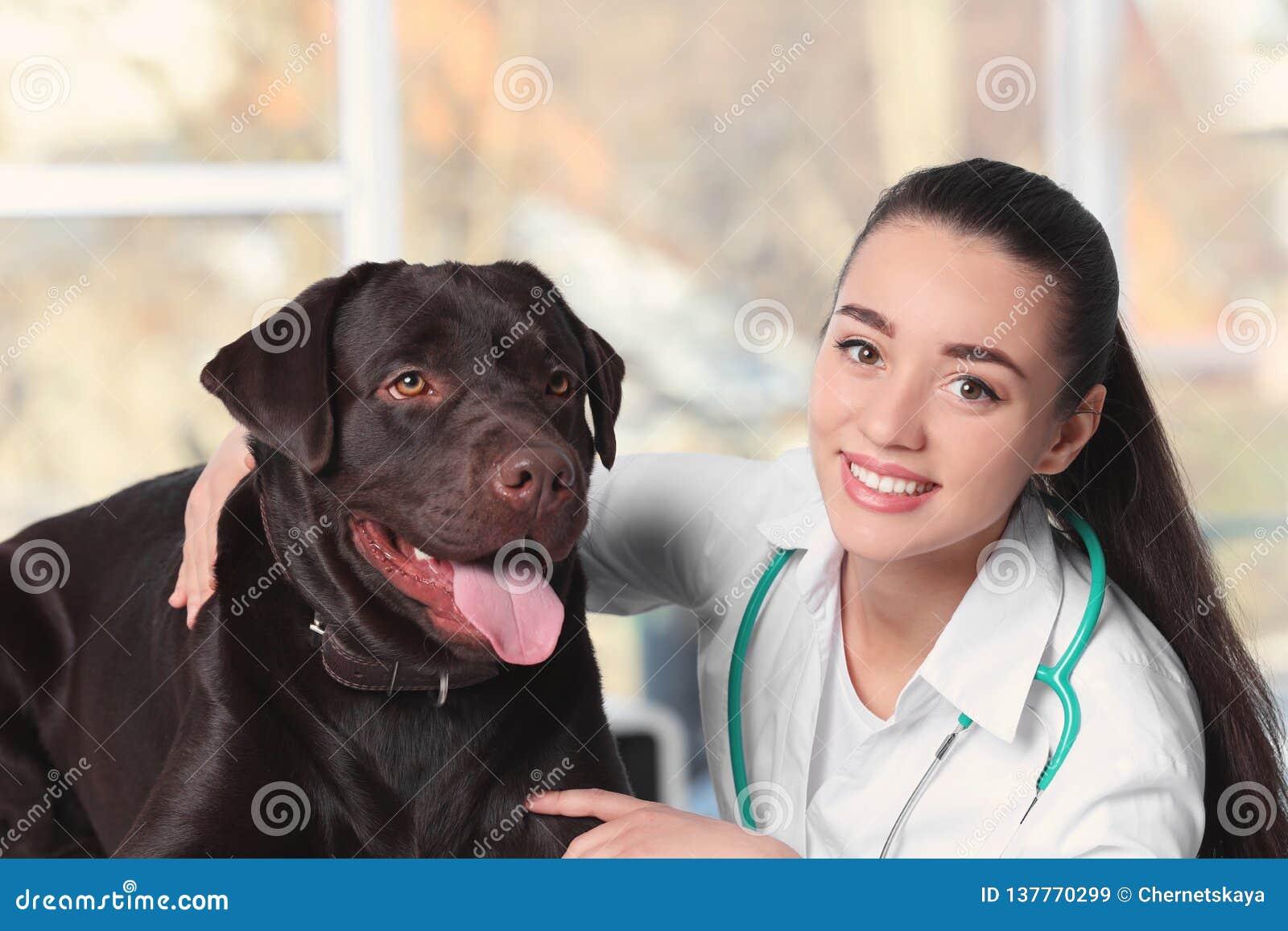 Veterinär doc med hunden i klinik