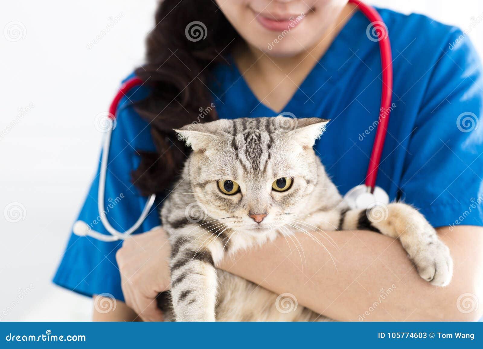 Veterinär- hållande gullig katt för kvinnlig doktor