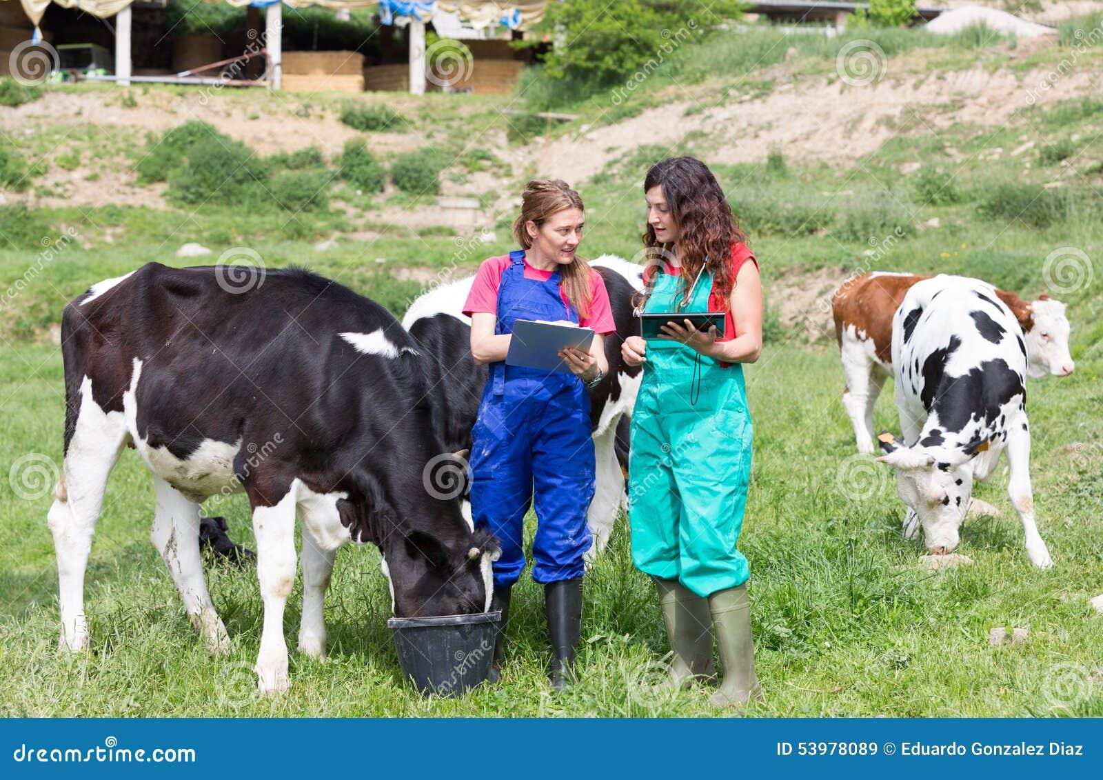Veterinair op een landbouwbedrijf